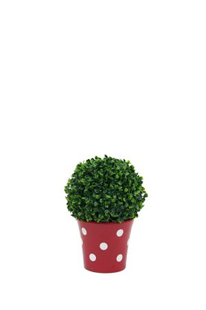 Topiary - Ball Small in Pot
