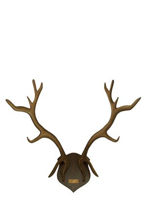 Antlers - Wooden Mounted